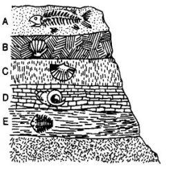 estratos corteza terrestre