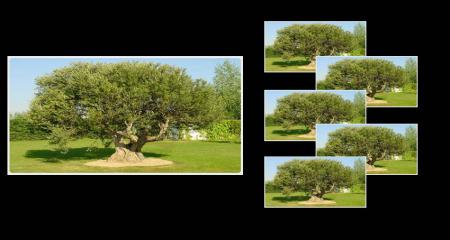 árbol = árboles